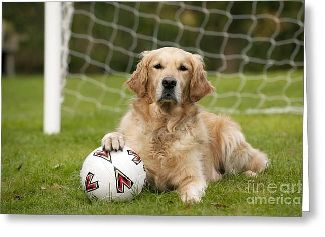 Goalkeeper Greeting Cards - Golden Retriever Dog Greeting Card by John Daniels