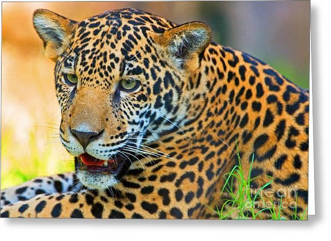 Wildlife In Captivity Greeting Cards - Jaguar Greeting Card by Millard H. Sharp