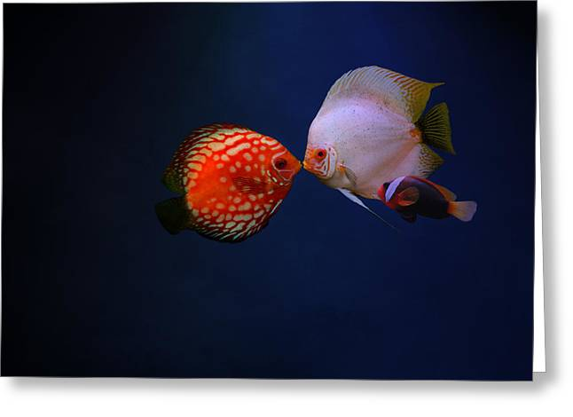 Clown Fish Photographs Greeting Cards - Love Greeting Card by Heike Hultsch