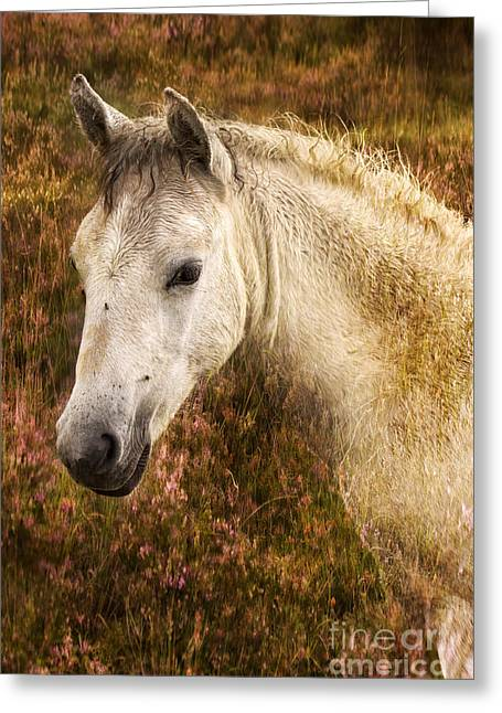 New Forest Pony Greeting Cards - New Forest Pony Greeting Card by Angel  Tarantella