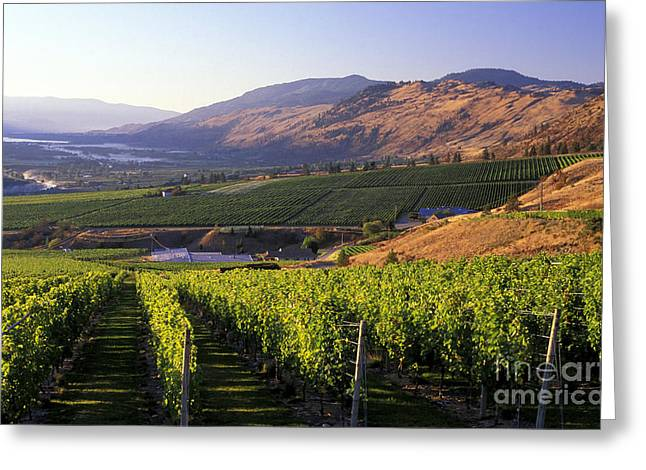 Okanagan Valley Vineyards Greeting Card by Kevin Miller