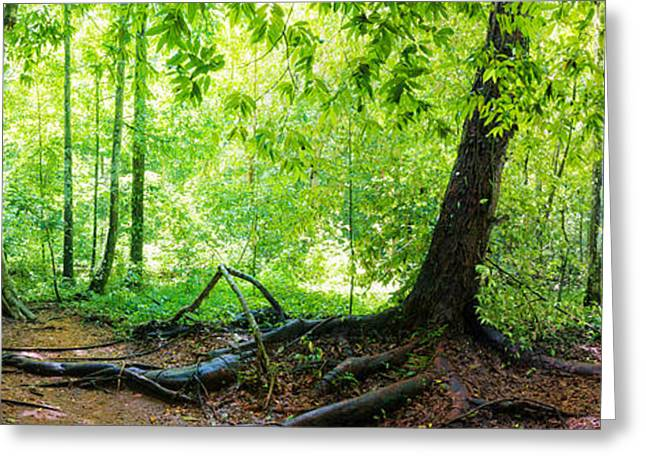 Peaceful Scenery Greeting Cards - Panorama of rainforest Greeting Card by Atiketta Sangasaeng