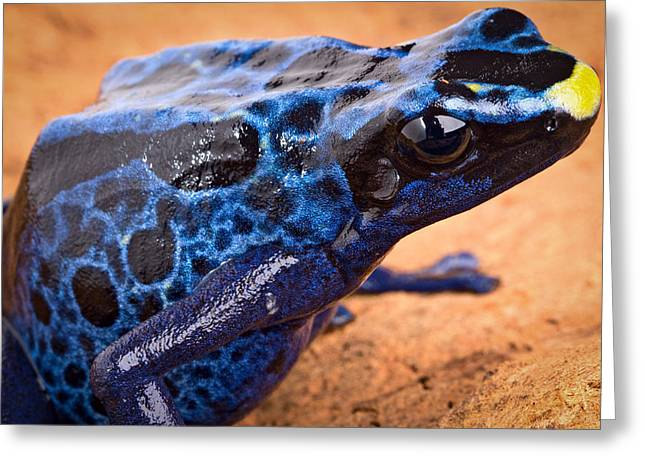 Poison Dart Frog Greeting Card by Dirk Ercken