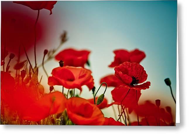 Bright Greeting Cards - Poppy Meadow Greeting Card by Nailia Schwarz