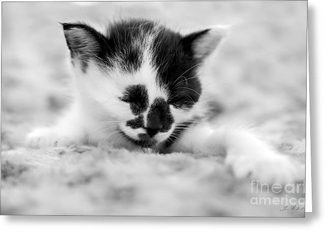 Pet And Owner Greeting Cards - Spotted Black and White Kitten Greeting Card by Iris Richardson