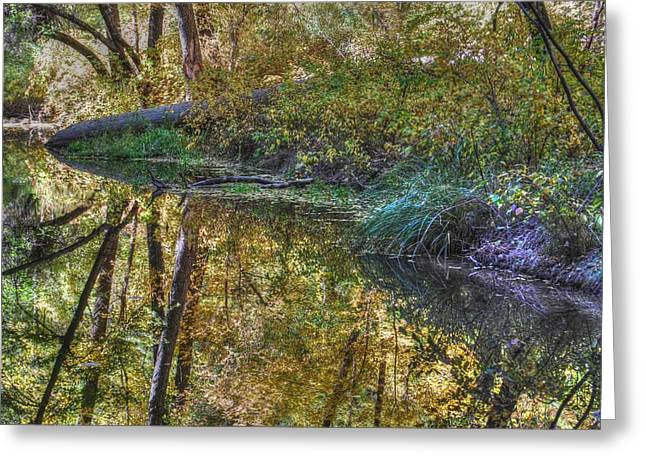 West Fork Greeting Cards - West Fork Oak Creek Greeting Card by Tam Ryan