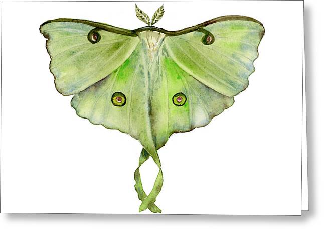 Background Paintings Greeting Cards - 100 Luna Moth Greeting Card by Amy Kirkpatrick