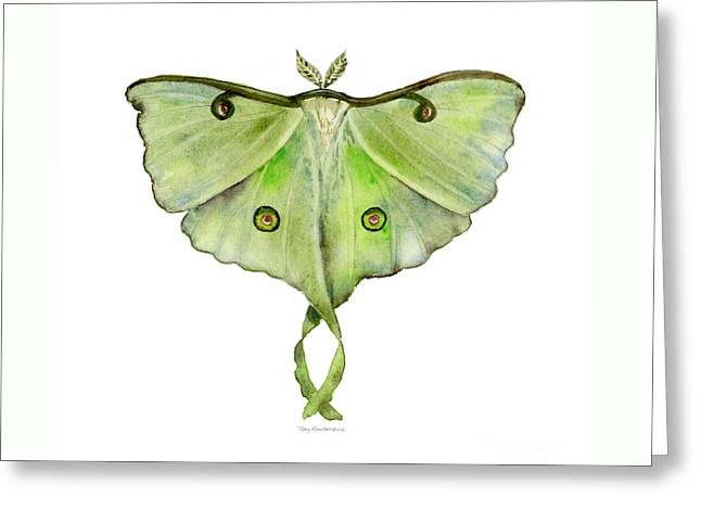 100 Luna Moth Greeting Card by Amy Kirkpatrick