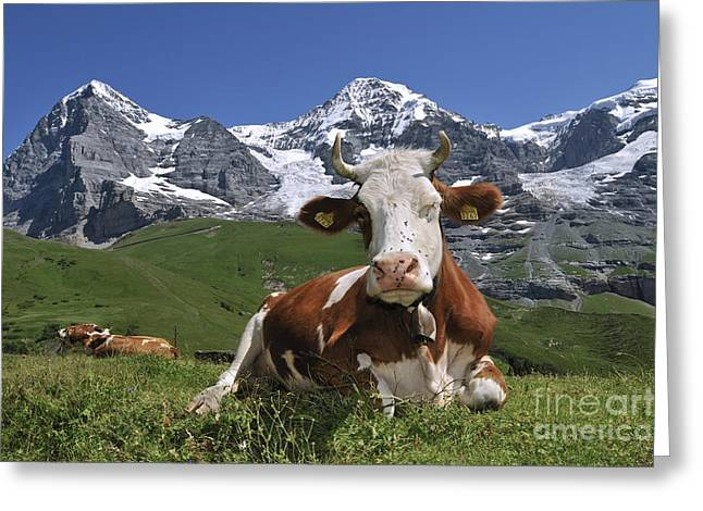 Cowbell Greeting Cards - 100205p181 Greeting Card by Arterra Picture Library