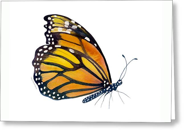 103 Perched Monarch Butterfly Greeting Card by Amy Kirkpatrick