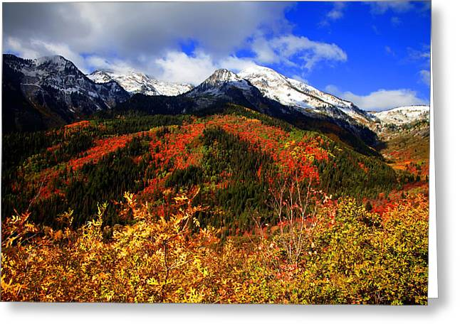 Fall Greeting Card by Mark Smith