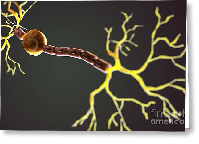 Bipolar Greeting Cards - Bipolar Neuron Greeting Card by Science Picture Co