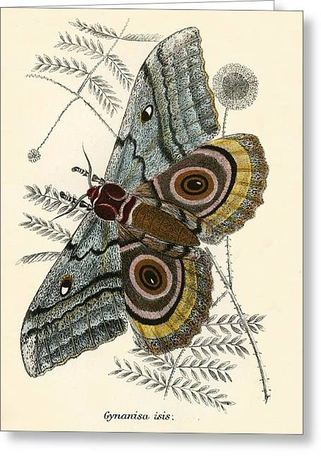 Lepidoptera Greeting Cards - Butterflies Greeting Card by English School