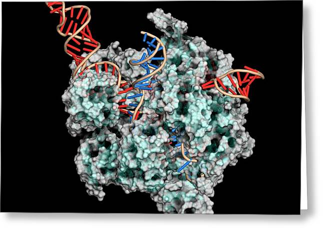 Crispr-cas9 Gene Editing Complex Greeting Card by Molekuul