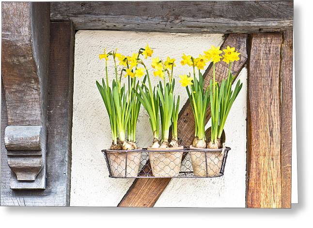 Decorative Floral Photographs Greeting Cards - Daffodils Greeting Card by Tom Gowanlock