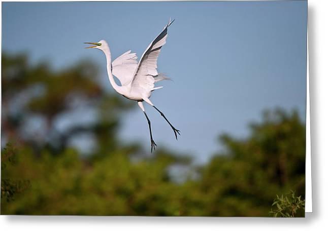 Florida, Venice, Audubon Sanctuary Greeting Card by Bernard Friel