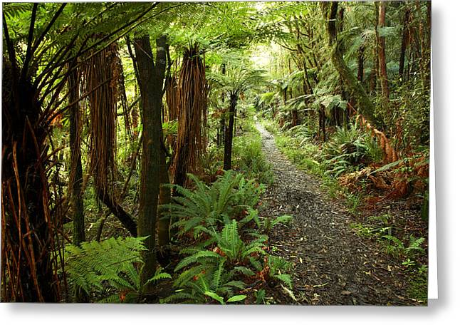 Humid Greeting Cards - Forest trail Greeting Card by Les Cunliffe