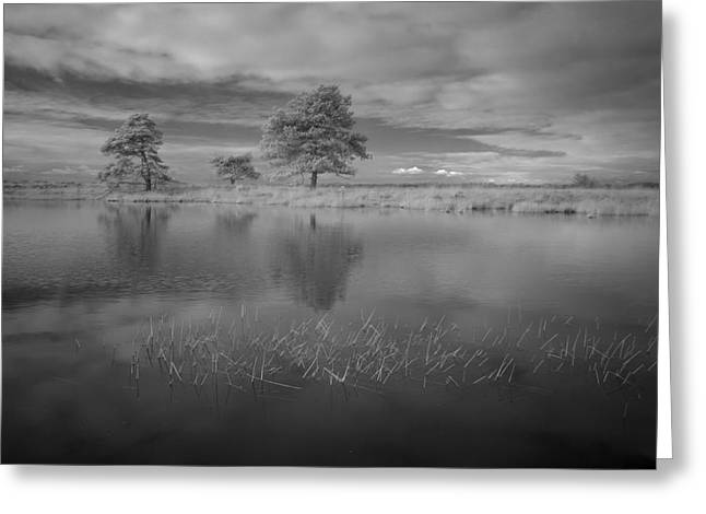 Alienate Greeting Cards - Infrared picture of the nature area Dwingelderveld in Netherlands Greeting Card by Ronald Jansen