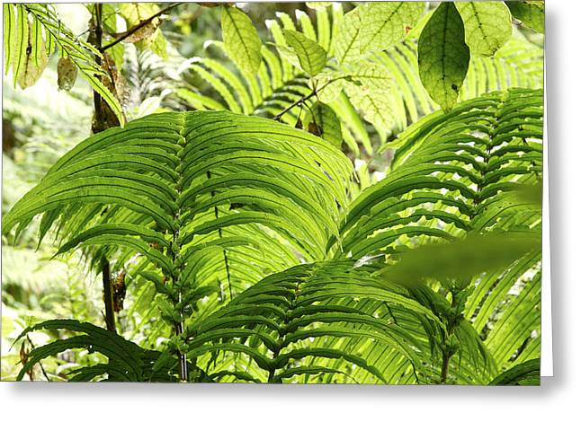 Tropical Photographs Greeting Cards - Jungle leaves Greeting Card by Les Cunliffe