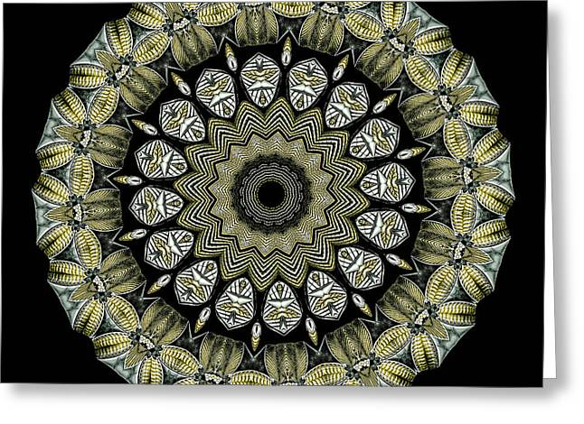 Metalic Greeting Cards - Kaleidoscope Ernst Haeckl Sea Life Series Greeting Card by Amy Cicconi