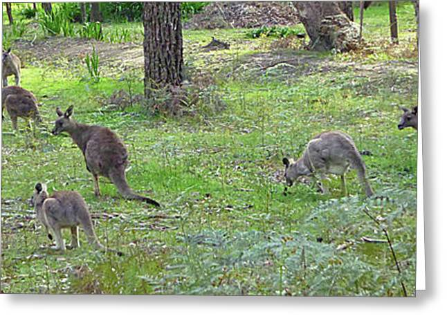 Forest Pyrography Greeting Cards - Kangaroo Greeting Card by Girish J