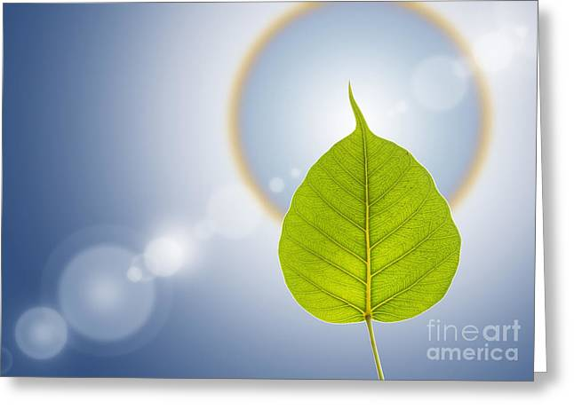Flares Greeting Cards - Pho Or Bodhi Greeting Card by Atiketta Sangasaeng
