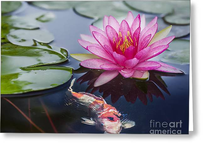 Gold Leave Greeting Cards - Pink lotus  Greeting Card by Anek Suwannaphoom