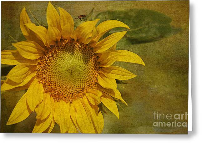 Yellow Sunflower Greeting Cards - Sunflower Greeting Card by Cindi Ressler