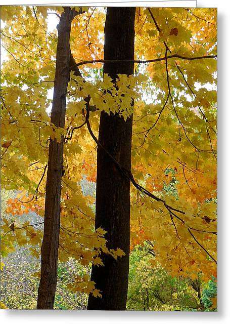 Indiana Autumn Greeting Cards - Tippecanoe County Indiana Greeting Card by Marsha Williamson Mohr