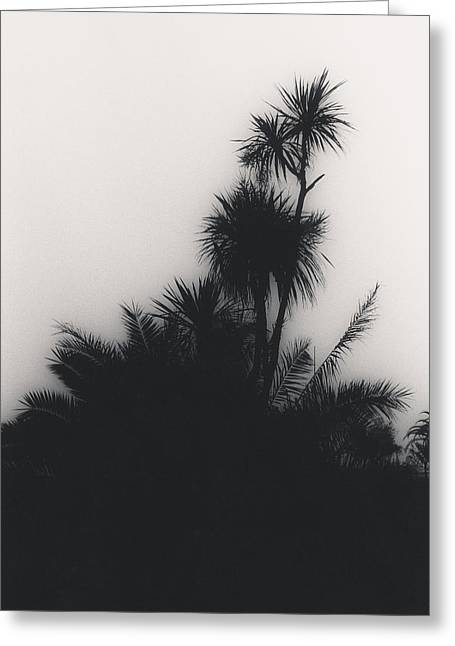 Tropical Plants Greeting Cards - Untitled Greeting Card by Didier Gaillard