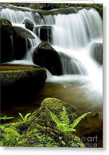 Allegheny Greeting Cards - West Virginia Waterfall  Greeting Card by Thomas R Fletcher