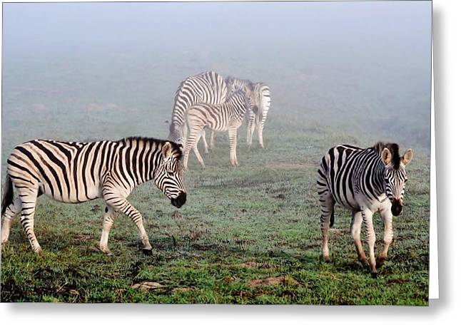 Black Greeting Cards - Zebras in the mist... Greeting Card by Werner Lehmann