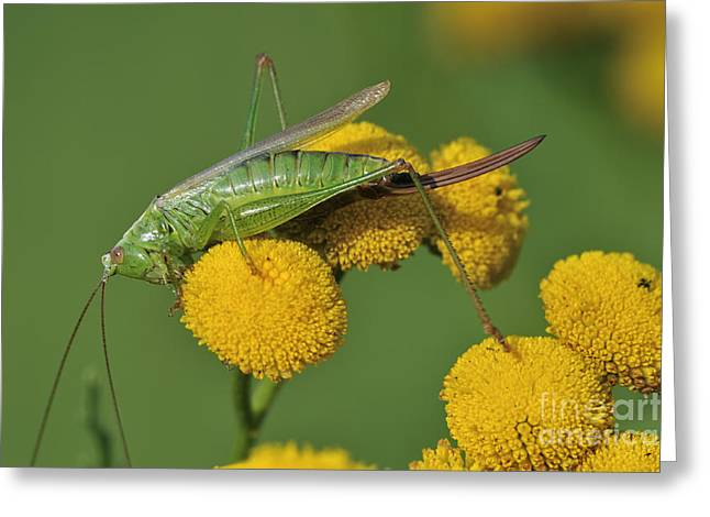 110221p245 Greeting Card by Arterra Picture Library