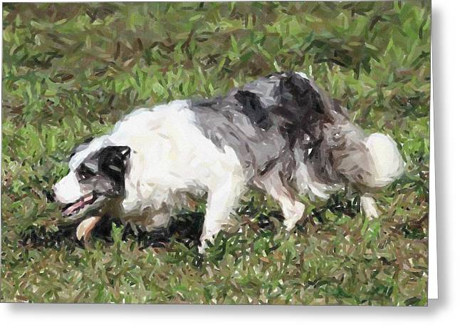 Border Pastels Greeting Cards - Border Collie Dog Portrait Greeting Card by Olde Time  Mercantile