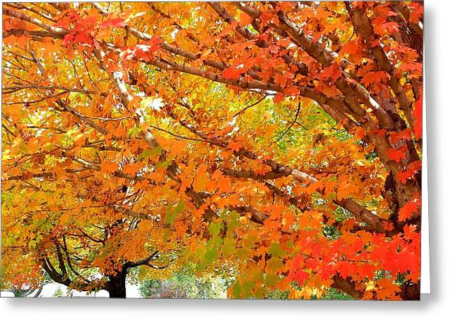 Autumn Colored Quilts Greeting Cards - Fall Explosion of Color Greeting Card by Kenny Glover