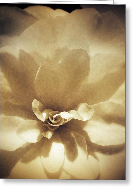 Flowers Photographs Greeting Cards - Flower Greeting Card by Les Cunliffe