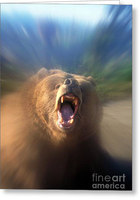 Growling Greeting Cards - Grizzly Bear Greeting Card by Mark Newman