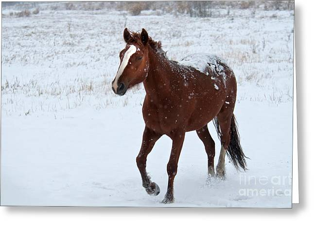Theria Greeting Cards - Horse In Snow, Yukon, Canada Greeting Card by Mark Newman