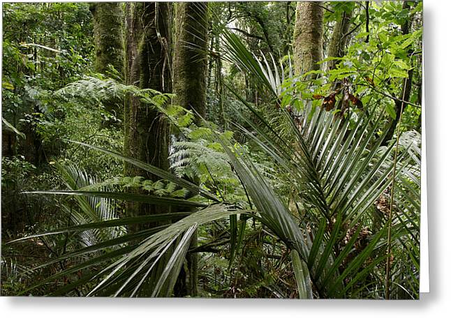 New Zealand Photographs Greeting Cards - Jungle leaves Greeting Card by Les Cunliffe