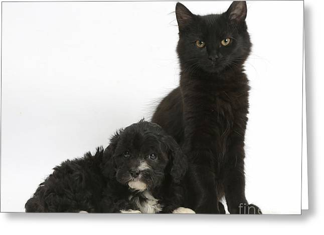House Pet Greeting Cards - Kitten And Puppy Greeting Card by Mark Taylor
