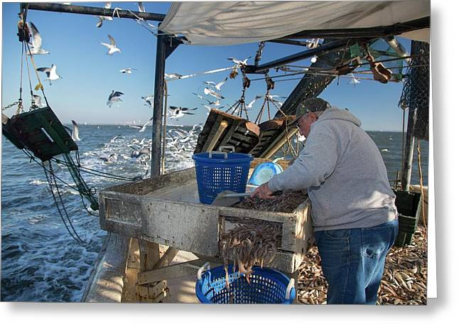Shrimp Fishing Greeting Card by Jim West