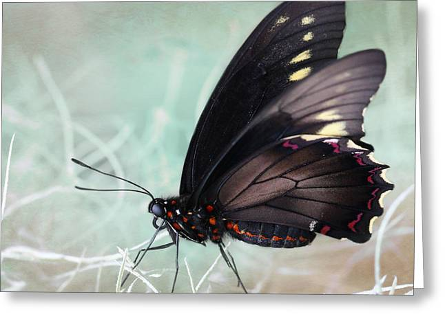 Exceptional Greeting Cards - Butterfly Greeting Card by Heike Hultsch