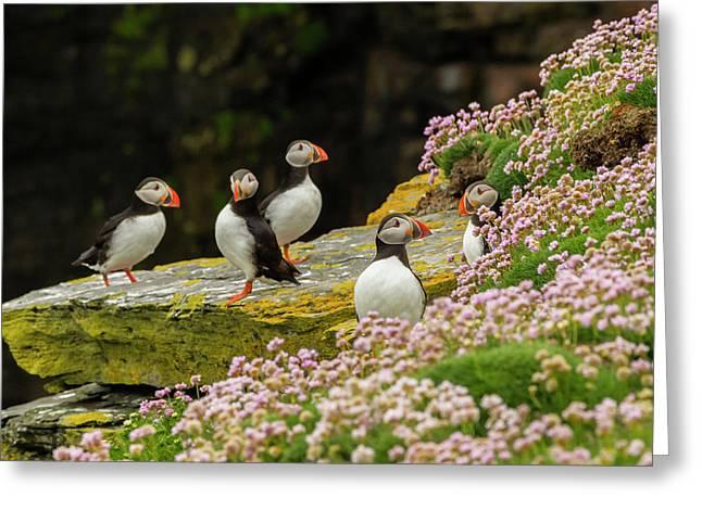 Europe, Scotland, Shetland Islands Greeting Card by Jaynes Gallery