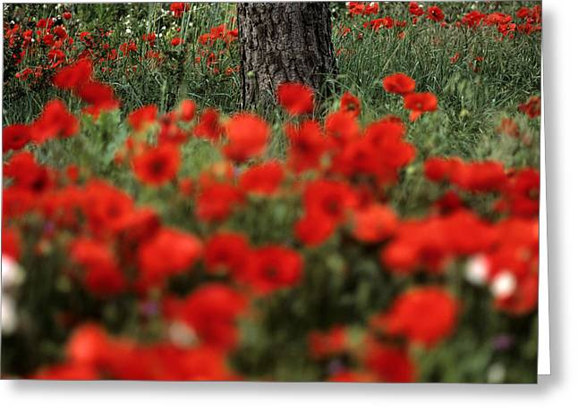 Part Of Greeting Cards - Field of poppies Greeting Card by Bernard Jaubert