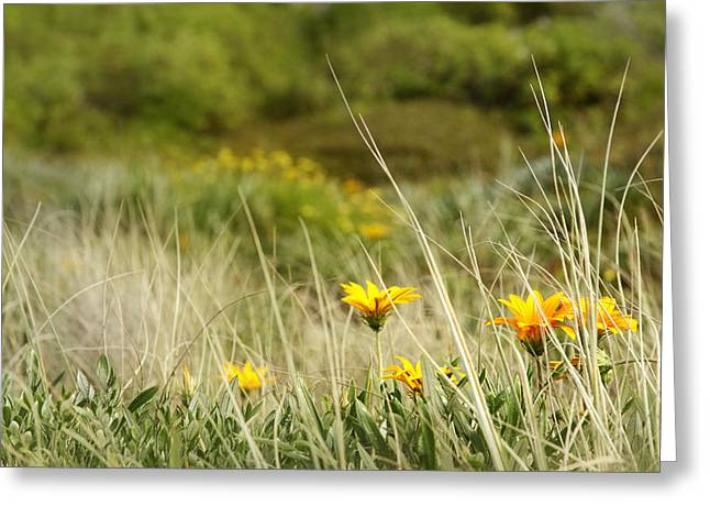 Yellow Wild Flowers Greeting Cards - Flowers Greeting Card by Les Cunliffe