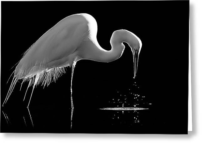 Great Egret Greeting Card by Bill Martin