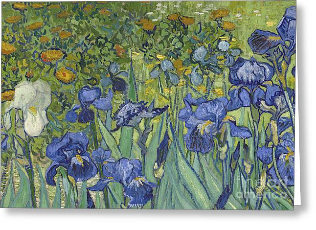 Vangogh Paintings Greeting Cards - Irises Greeting Card by Vincent Van Gogh