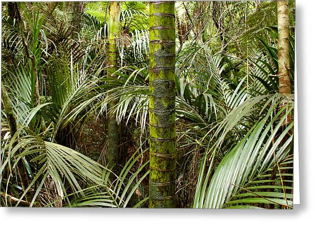 Tropical Vegetation Greeting Cards - Jungle Greeting Card by Les Cunliffe