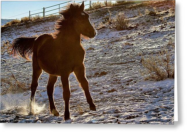 Advocacy Greeting Cards - 13. Lockwood Mustangs Greeting Card by Maria Jansson