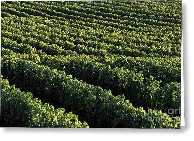 Fruit And Wine Greeting Cards - Okanagan Valley Vineyards Greeting Card by Kevin Miller
